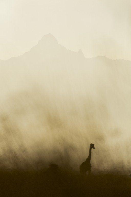 köpa vilda djurbilder tryckta på glas | felix oppenheim
